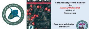 ventnorensis – Coming Soon