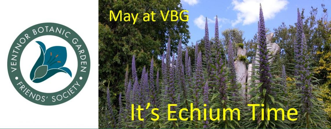 May – It's Echium Time