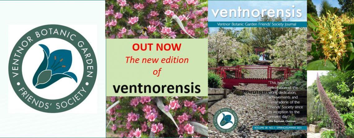 Ventnorensis